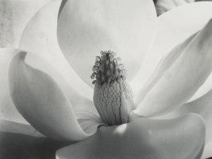 Magnolia Blossom (1925)